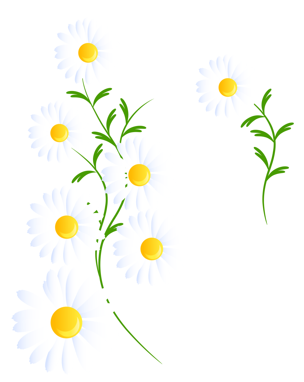 medium resolution of daisies clipart transparent white decoration png