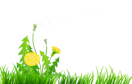 small resolution of dandelion transparent grass with dandelions png clipart