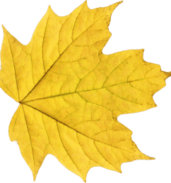 fall png background yellow leaf free icons [ 900 x 892 Pixel ]