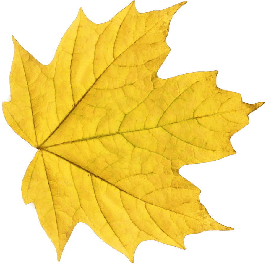 hight resolution of fall png background yellow leaf free icons