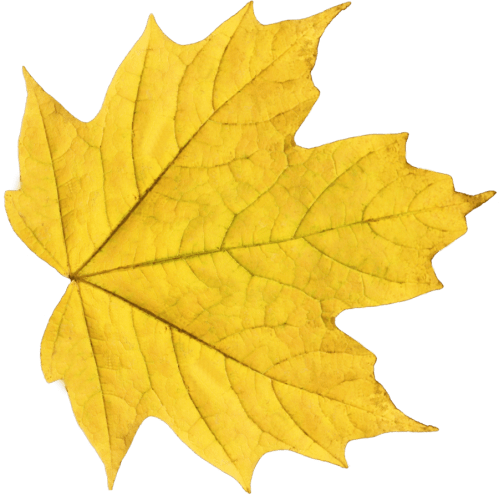 small resolution of fall png background yellow leaf free icons