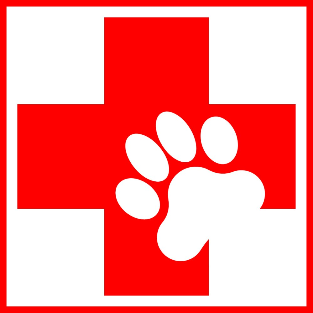 medium resolution of a dog s life the top 10 poisons for your dog southwest cpr first aid registration
