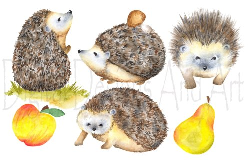 small resolution of watercolor hedgehog clipart illustrations creative market