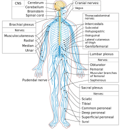 human spine minimal png control systems biology for [ 1000 x 1111 Pixel ]