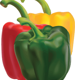 pepper clipart pepper plant peppers big image png [ 1949 x 2400 Pixel ]
