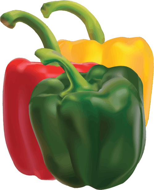 small resolution of pepper clipart pepper plant peppers big image png