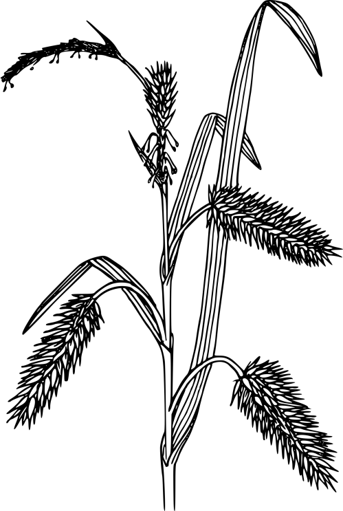 small resolution of porcupine clipart black and white