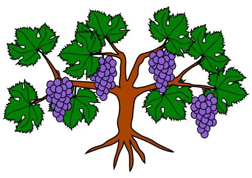 small resolution of file grapevine wikimedia commons