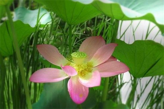 夏天最有代表性的花 - 花語網