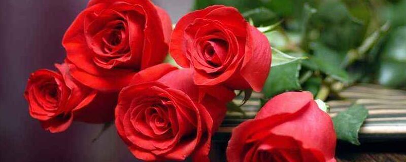 5支玫瑰花代表什么