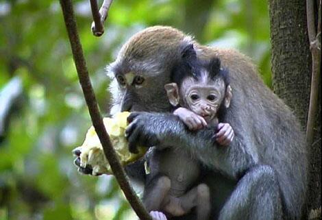 Das verrckte Paarungsverhalten im Tierreich  GMXCH
