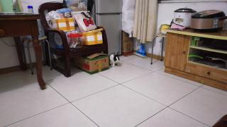 【小白日记】之傻兔日常7
