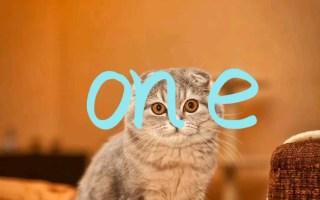 超级可爱的猫咪和小狗——卡点!