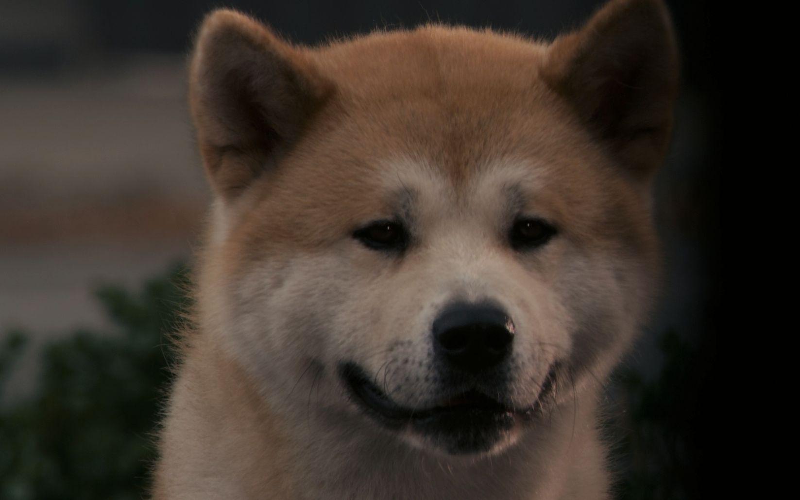 忠犬八公的全部相關視頻_bilibili_嗶哩嗶哩彈幕視頻網