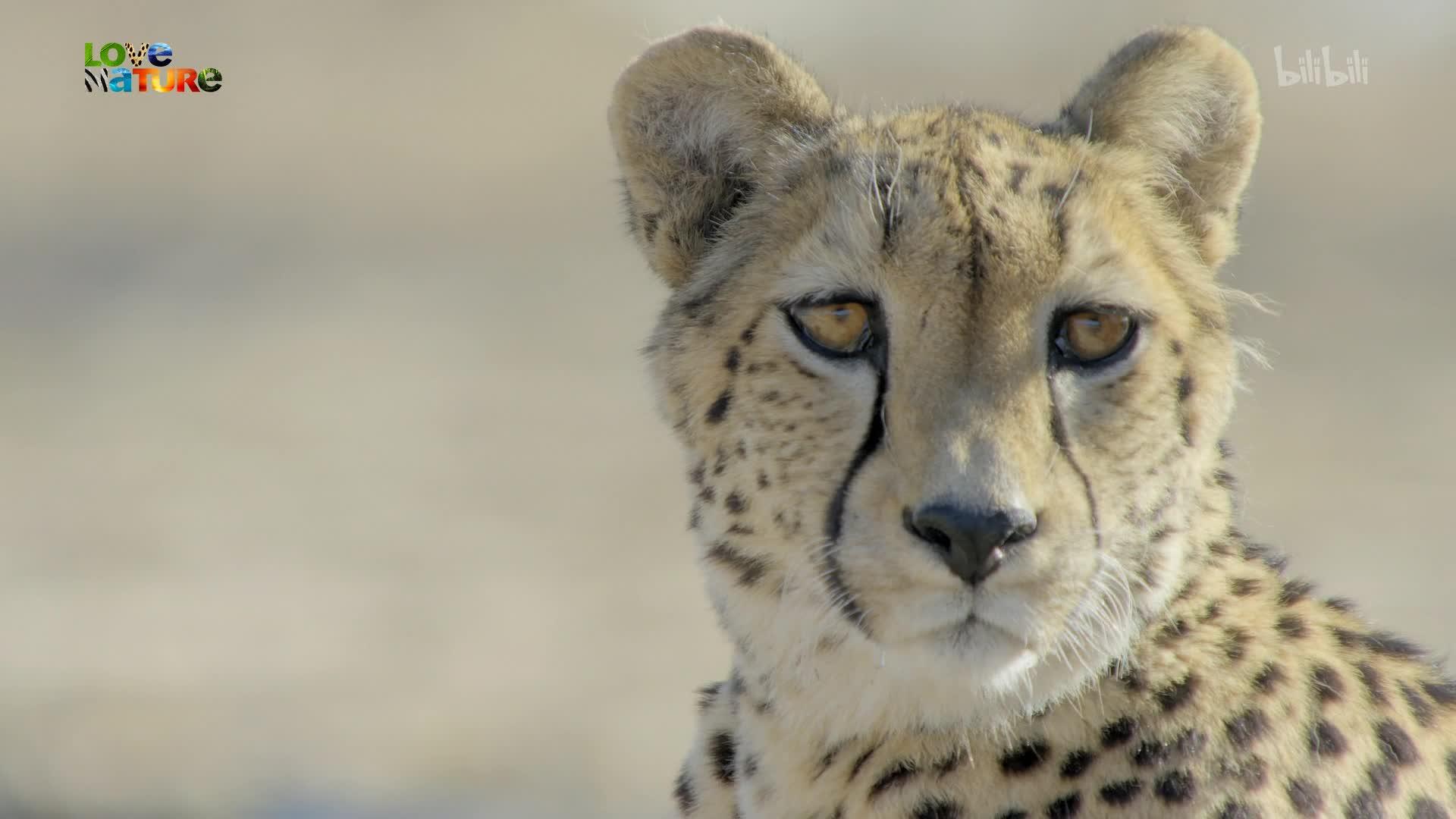 非洲動物世界:第3集_紀錄片_bilibili_嗶哩嗶哩