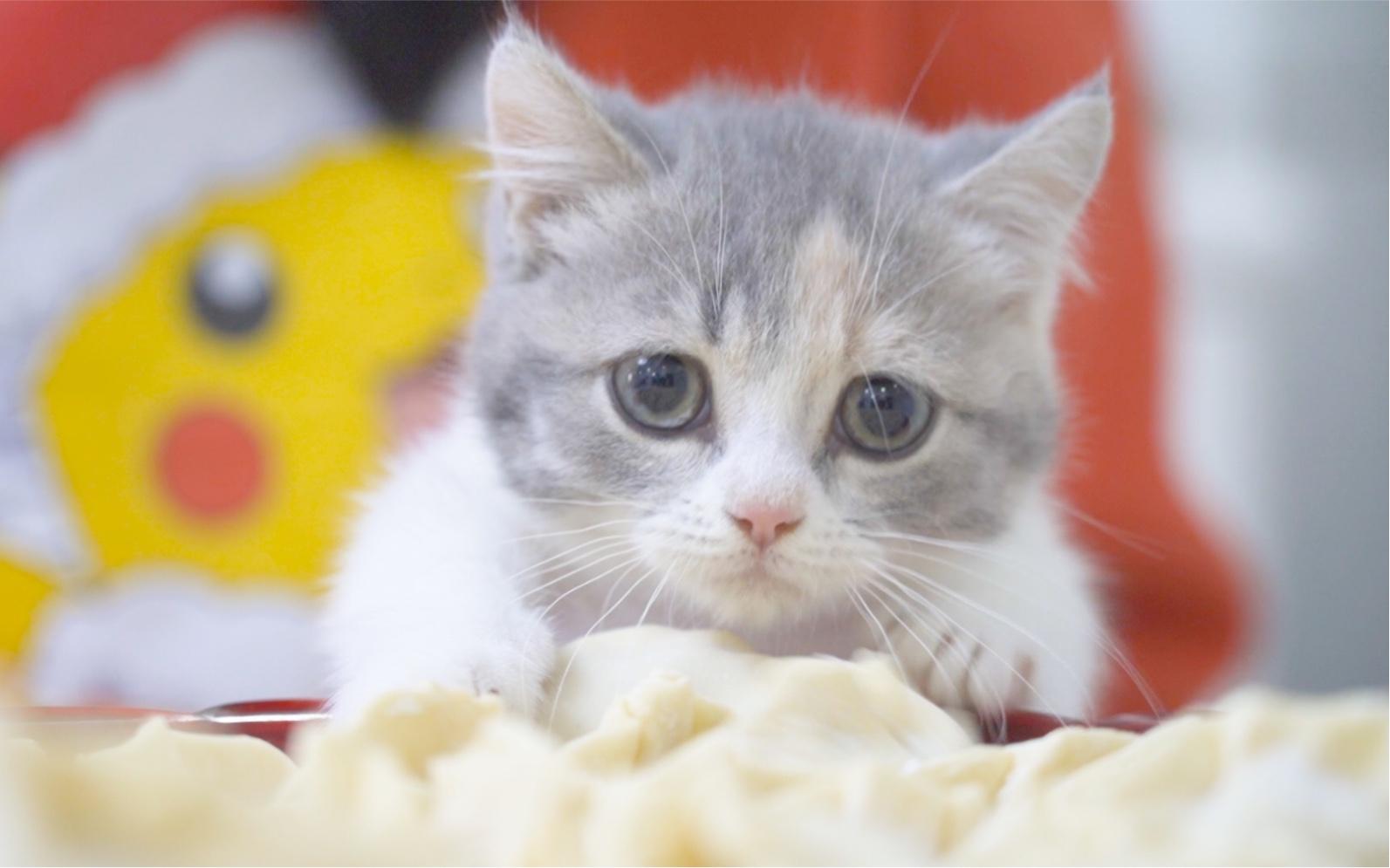 千萬別和小奶貓一起包餃子!你的餃子會越包越少……_嗶哩嗶哩 (゜-゜)つロ 干杯~-bilibili
