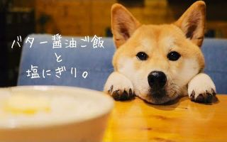 【柴犬食堂】我是魔鬼哦:小恶魔柴犬和恶魔黄油酱油饭,盐饭团 || ShibaInuPunchan【斑豆搬运】