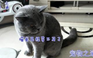 【宠物之道】女主人一声吃饭了,一群猫咪从各个角落跑过来,这场面包治不开心