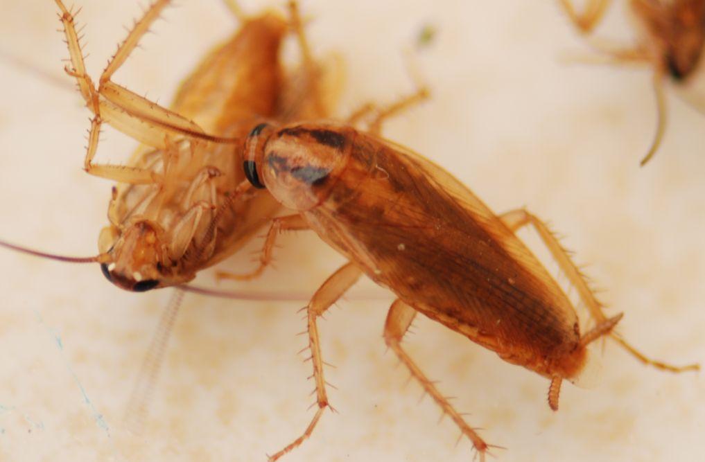 蟑螂怎么能一次杀死-小柚妹站