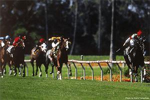 【赛马娘】日本名马—「西沙里奧」—「首匹美國一級賽冠軍馬」—シーザリオ Cesario-小柚妹站