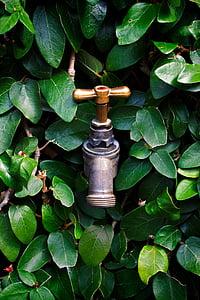 kitchen faucet spout remodel pics 免费图片: 水龙头, 花园, 自然, 户外, 园艺   hippopx