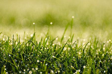 免費圖片: 自然. 露水. 綠色. ch. 早上   Hippopx
