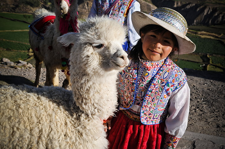 免費圖片: 秘魯. colca 山谷. 印加人. 和. 小女孩. 葉片. 羊駝 | Hippopx