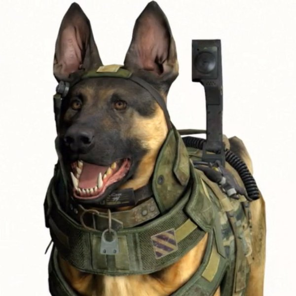 Call of Duty Dog Know Your Meme