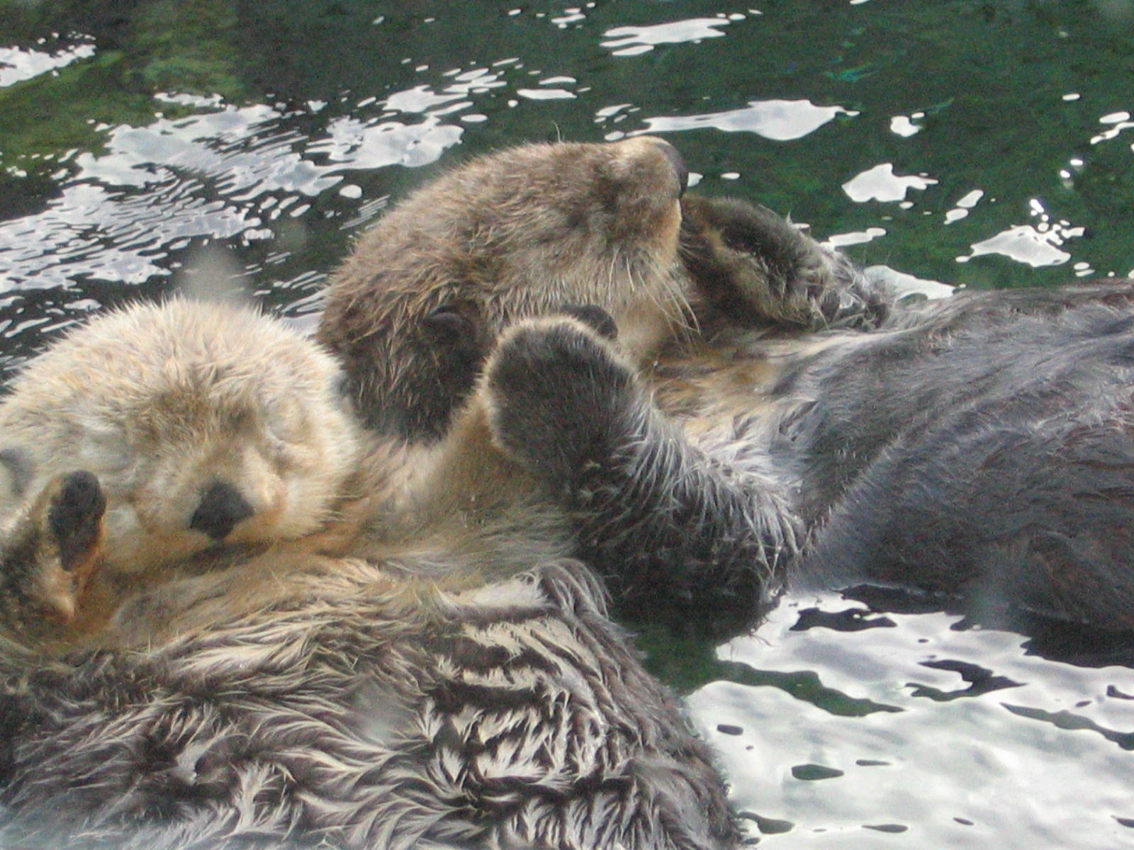 Anime Girl Holding Hands Wallpaper Image 15505 Otters Holding Hands Know Your Meme