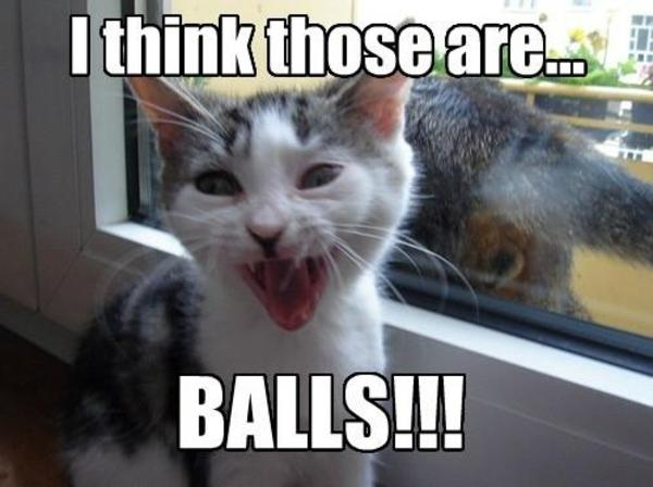 BALLS!!! LOLcats Know Your Meme