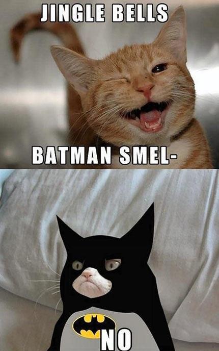 Grumpy Batman Cat