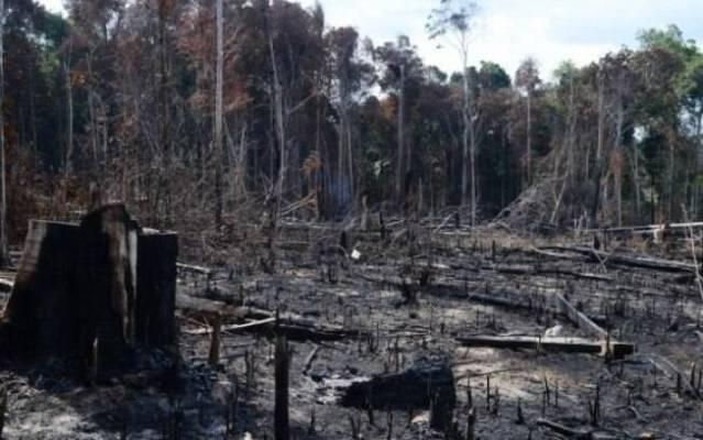 Imagens do desmatamento na Amazônia