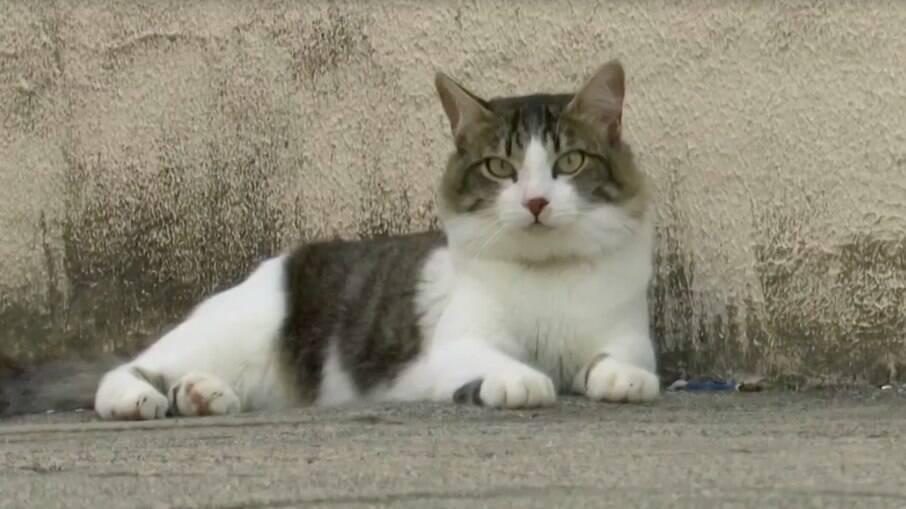 Os gatos são autores da petição
