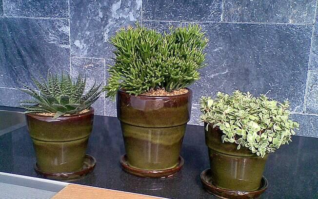Decore com folhagens e plantas  Decorao  iG