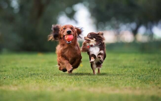 Cachorros felizes