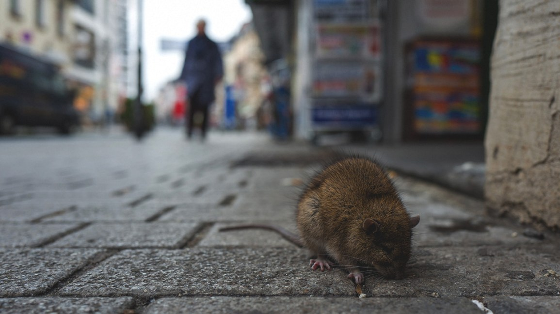 Hantavirus Infections: What You Need to Know