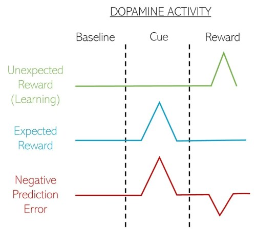 small resolution of figure 2 reward prediction and subsequent dopamine activity unexpected rewards increase the activity of dopamine neurons acting as positive feedback