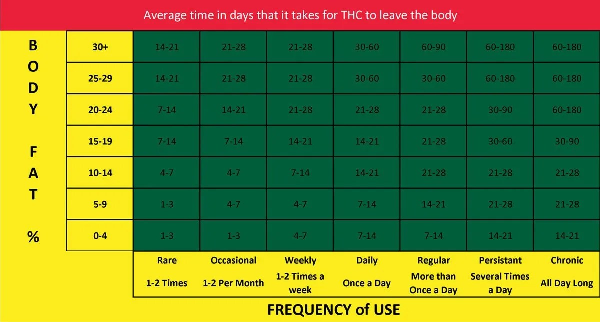 How long does thc stay in your system calculator also stuff stoners like rh stuffstonerslike