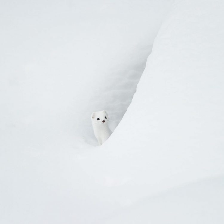 white furry creature in the snow