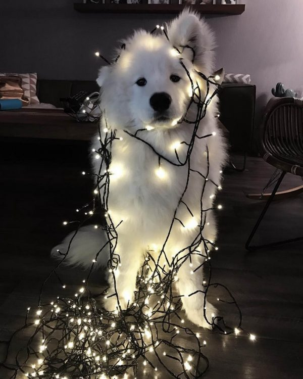 christmas light poof
