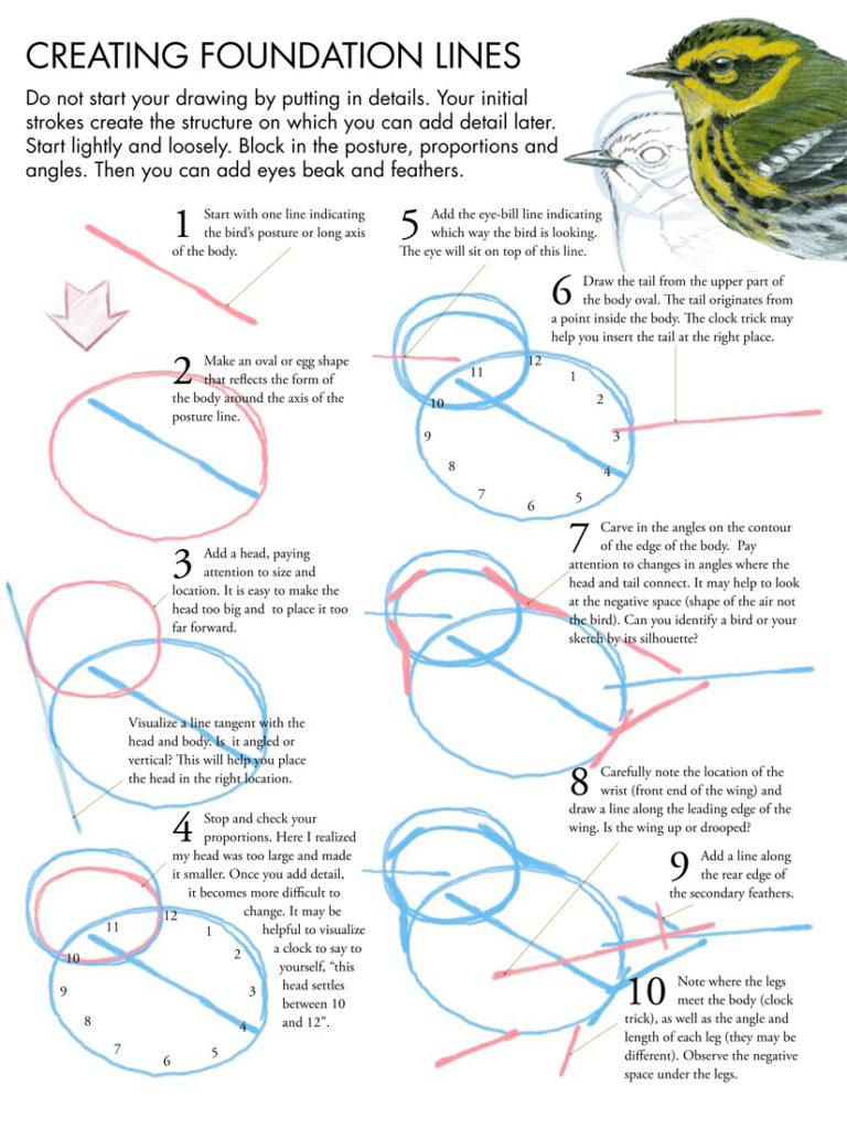 hight resolution of how to draw birds