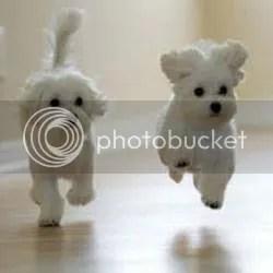 foto yang bisa di pakai untuk iklan makanan anjing
