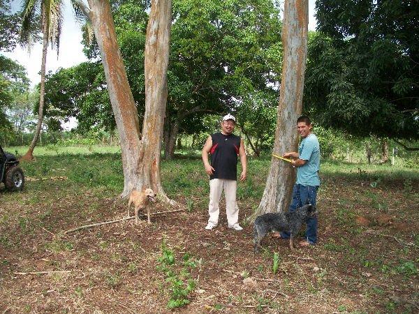 Ebony Wood Suppliers 53