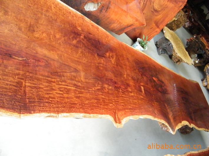 2010 10 09 19 16 羅漢門園藝 出售中國紅豆樹苗木 高級用材 樹姿優美