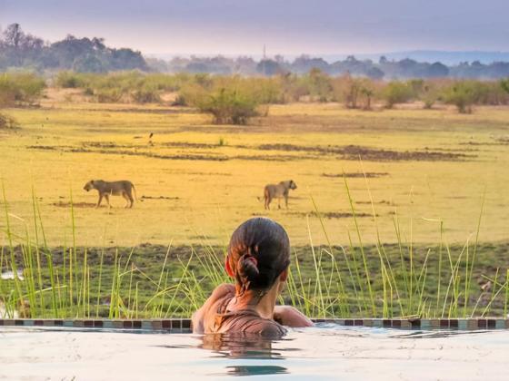 Kafunta pool with lions