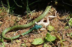 snakeludo1.181155.jpg
