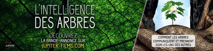 L'Intelligence                             des Arbres, au cinéma / Jupiter-Films.com