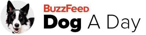 BuzzFeed Animals