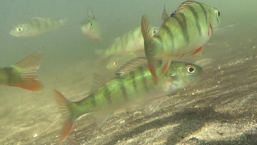 Vissen en het klimaat