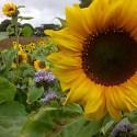 The Nature Garden | Gardening, Wildlife & Nature Notes